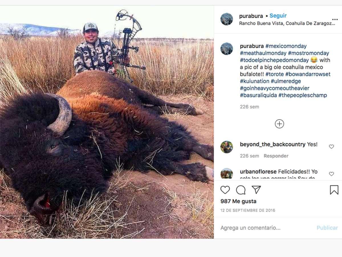 Pasaron 100 años para ver a bisontes en Coahuila y ya cazaron a uno, denuncian en redes