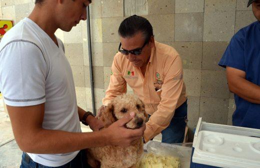 Invitan a semana de vacunación antirrábica | La Opción de Chihuahua