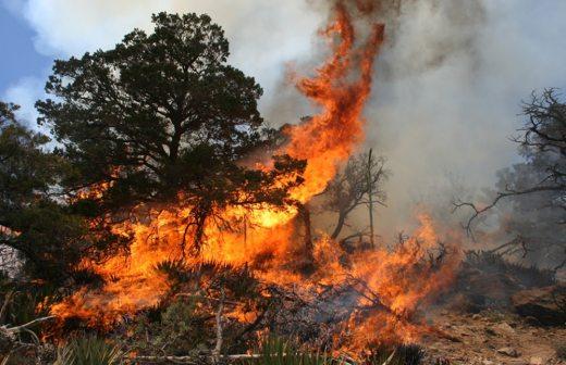 incendios/forestales