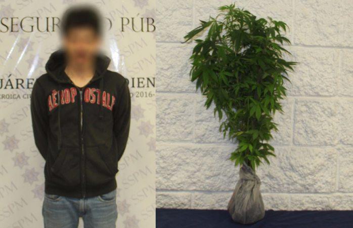Detienen a joven que cargaba varias plantas de marihuana