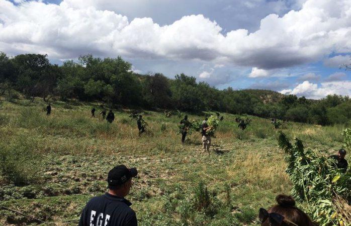 Destruyen plantíos de marihuana y amapola en Valle de Zaragoza