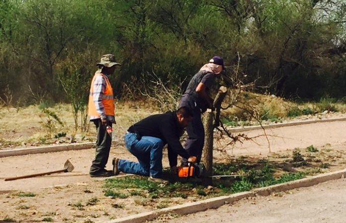 Realiza Mantenimieto urbano  la reposición de 175 árboles en parque El Encino