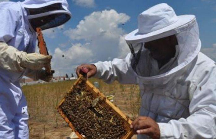 Se recupera apicultura en la región de Cuauhtémoc