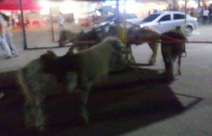 Vuelve maltrato a ponys reales en carrusel de la feria