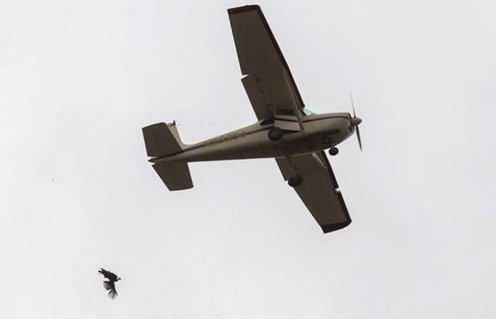 Video: lanzan pavos vivos desde una avioneta en EU