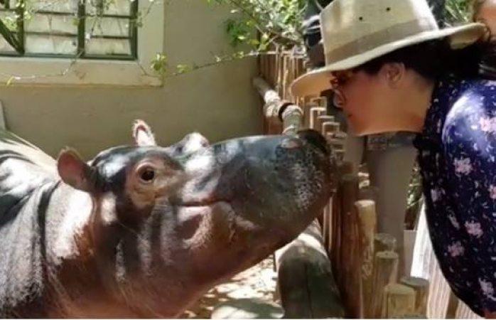 Salma Hayek desobedece a veterinario y besa a hipopótamo