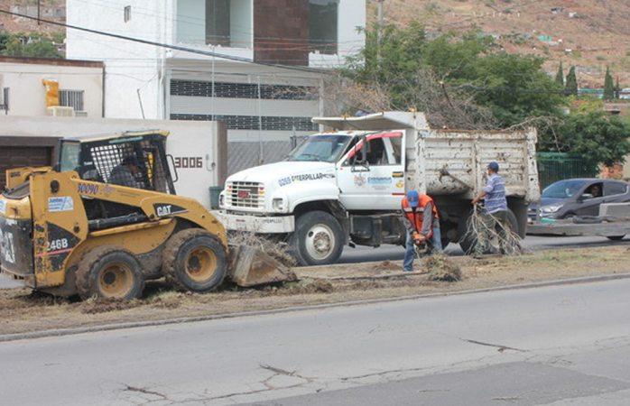 Retiran 52 árboles secos de la Lombardo Toledano