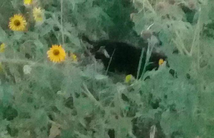 Piden ayuda para rescatar a Husky atrapado en arroyo