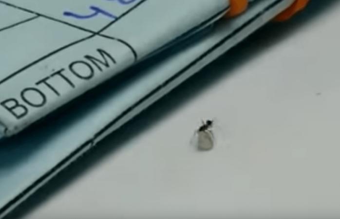 Vídeo; hormiga roba un diamante de joyería