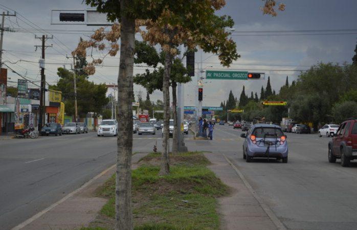 Realizará Mantenimiento Urbano estudio en arboles de la avenida Tecnológico