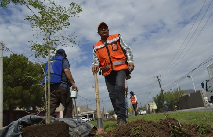 Planta Mantenimiento Urbano 250 árboles en la avenida Lombardo Toledano