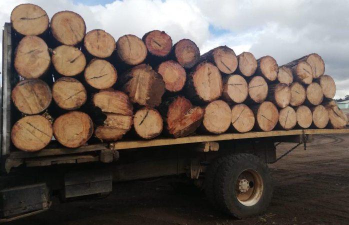 Aseguran camión con madera en Guachochi, detienen a uno