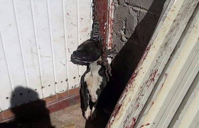 Protestan en redes por trágica muerte de can en Parral