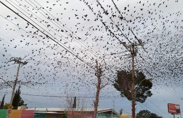 Sigue invasión de pájaros en kinder a pesar de poda