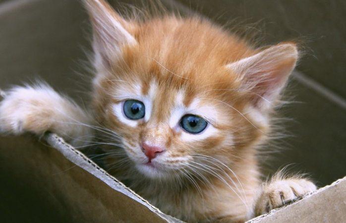Hoy, día internacional del gato, ¿por que se celebra?