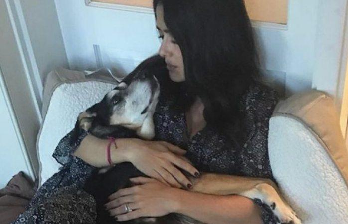 Murió la perrita que Salma Hayek rescató en las calles de México