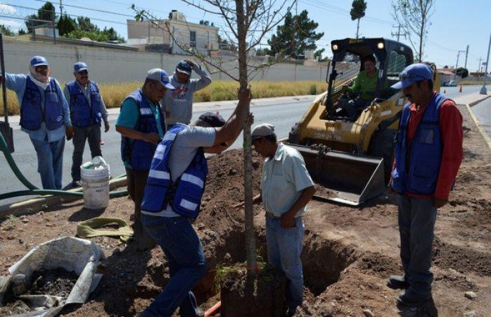 Con más de 600 árboles reforesta Gobierno Municipal calles, parques y escuelas de la ciudad