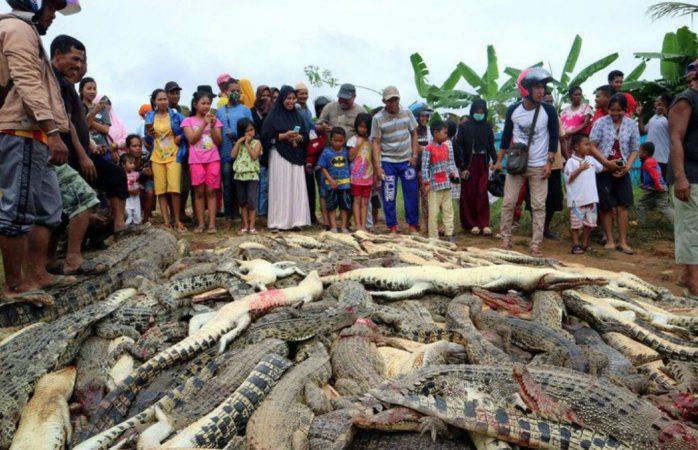 Aldeanos matan 292 cocodrilos en Indonesia