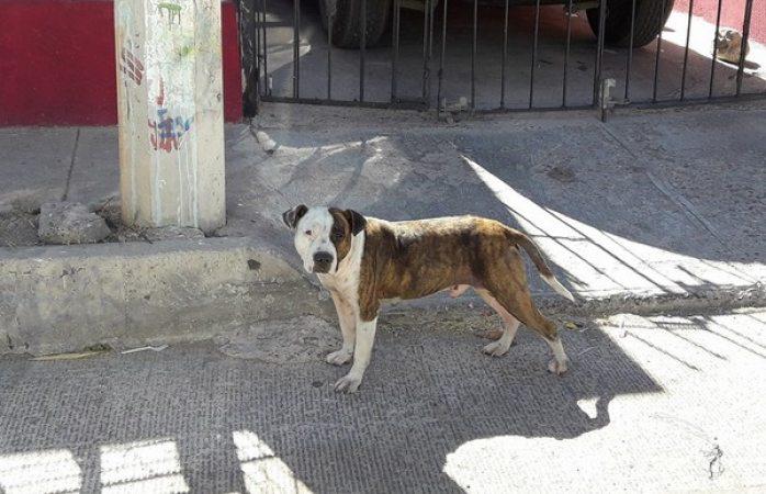 Cuenta Dspm con guía para atender maltrato o agresiones de mascotas
