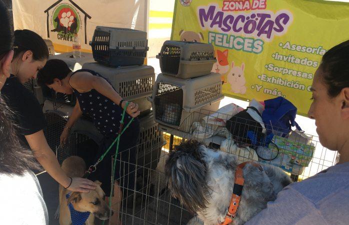 Dan en adopción perritos en Domingo Feliz