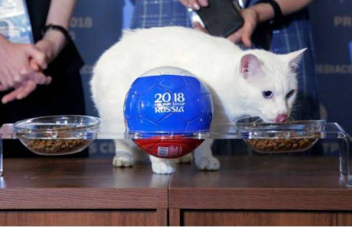 El gato Aquiles pronostica que Rusia ganará en primer juego mundialista