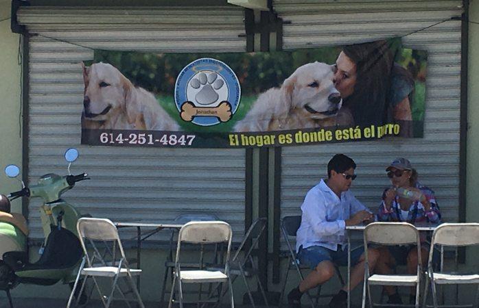 Organizan hamburguesada en beneficio a perritos de refugio