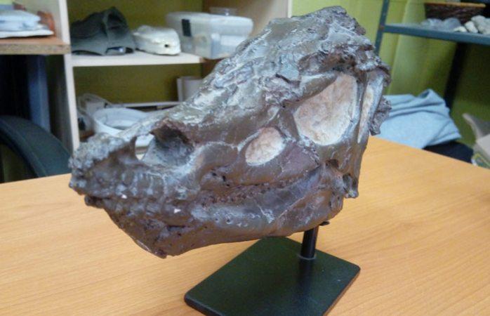 Hacen el primer hallazgo de un raro dinosaurio en Coahuila