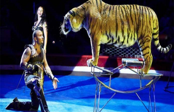 Convulsiona tigresa y domador le echa agua