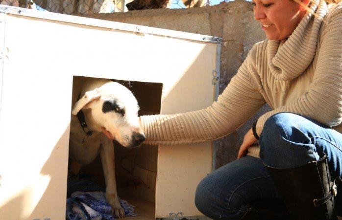 Trabajadores de Jabil hacen casas de madera para perritos callejeros