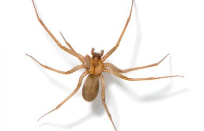 ¿Te pico una araña y no sabes que hacer? enseñarán antídotos en curso
