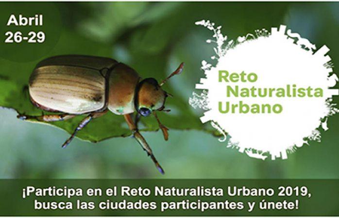 Reto naturalista urbano 2019: observa la diversidad de tu ciudad