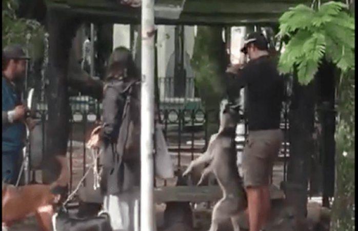 Entrenador ahorca a perro husky en Cdmx y lo detienen por maltrato animal