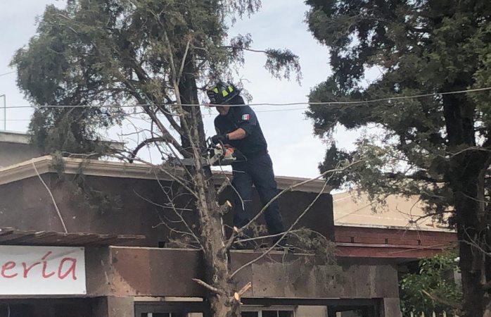 Cae pino encima de una casa en colonia granjas