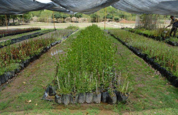 Siguen donaciones de árboles a ciudadanos durante agosto