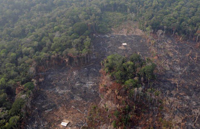 Devastación en el Amazonas equivale a 3 veces la cdmx