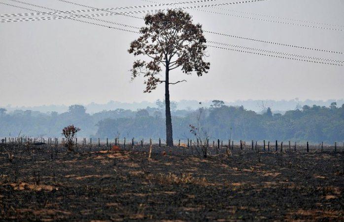 Convoca Francia a movilización de potencias para salvar Amazonia