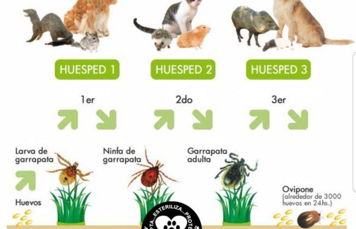 El 90% de las pulgas y garrapatas se alojan en el ambiente y no en las mascotas