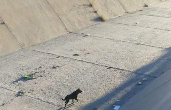 Reportan perrito atrapado en el arroyo los nogales