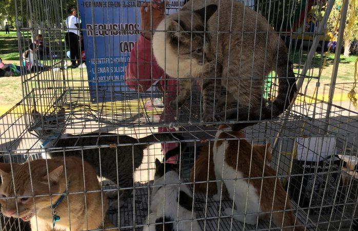 Instalan módulo de adopción de mascotas en domingo feliz