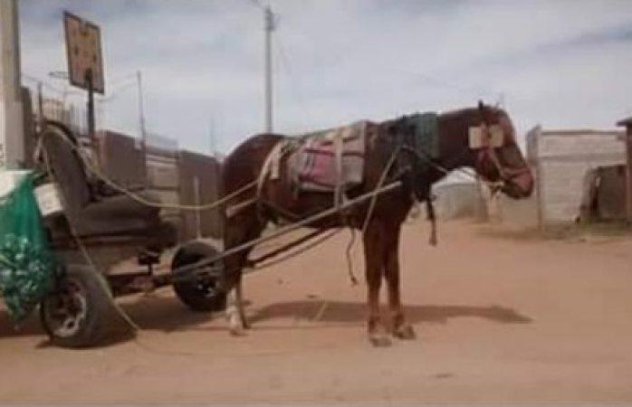 Denuncian maltrato a caballo por hombre que compra chatarra