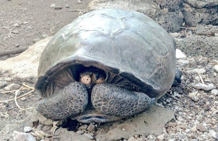 Encontraron una tortuga que se creía extinta hace un siglo
