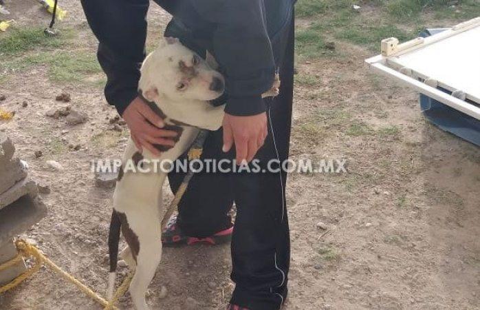 Rescata asociación protectora de animales a cachorro