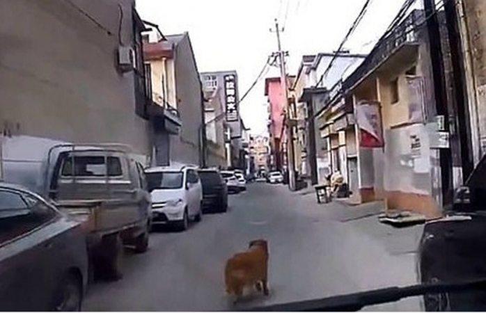 Perro héroe guió a una ambulancia hasta su dueña desmayada