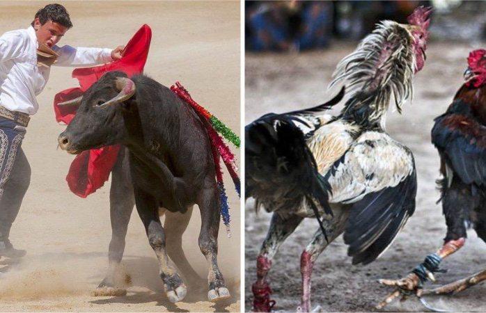 Rechazan en cabildo de Juárez prohibir corridas de toros y gallos
