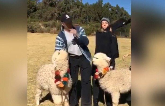Alpaca le escupe a Sergio Mayer durante sus vacaciones en Perú (VIDEO)