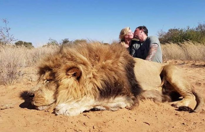 Pareja se besa sobre cadáver de león