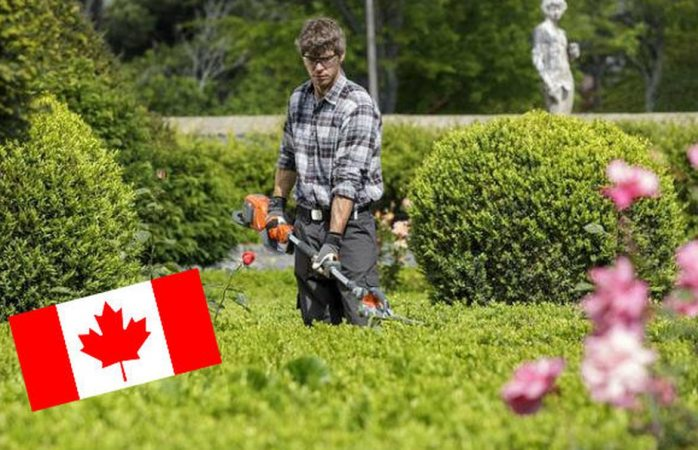 Canadá busca jardineros mexicanos que quieran ganar 29 mil pesos al mes