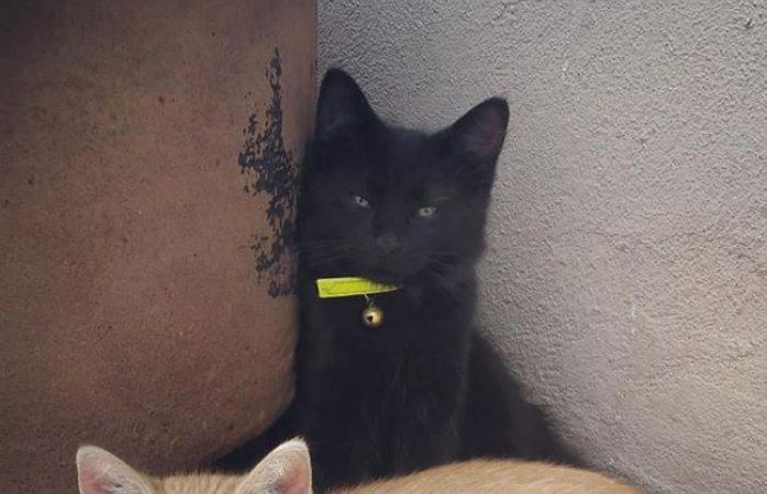 Buscan a gatito perdido
