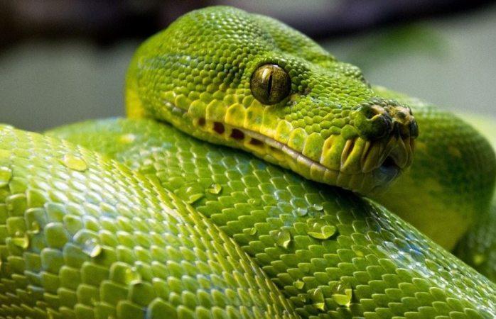 Hombre responde al ataque de una serpiente a mordiscos