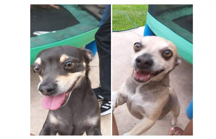 Piden ayuda para encontrar a mascotas extraviadas